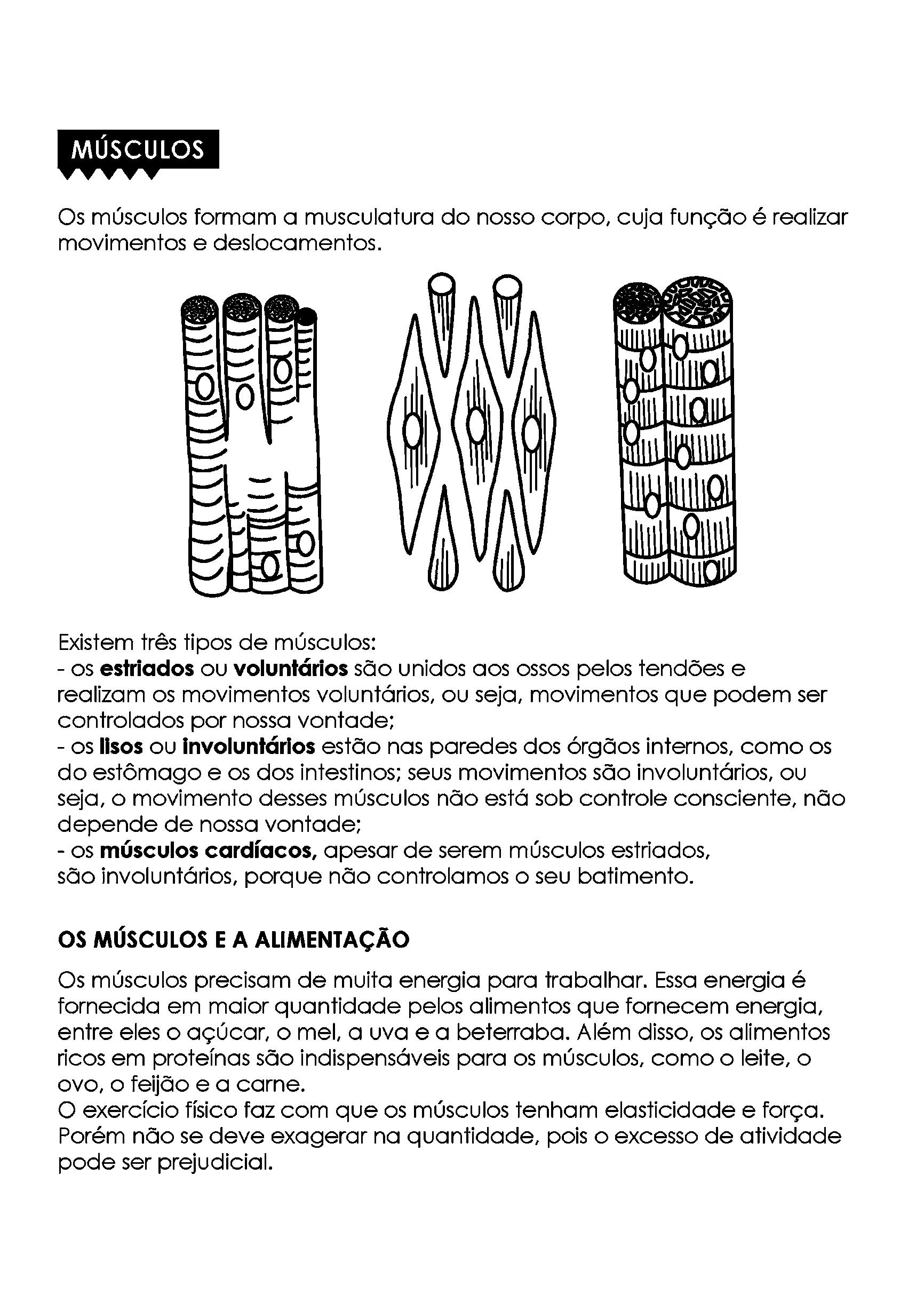 texto sobre os músculos do corpo humano
