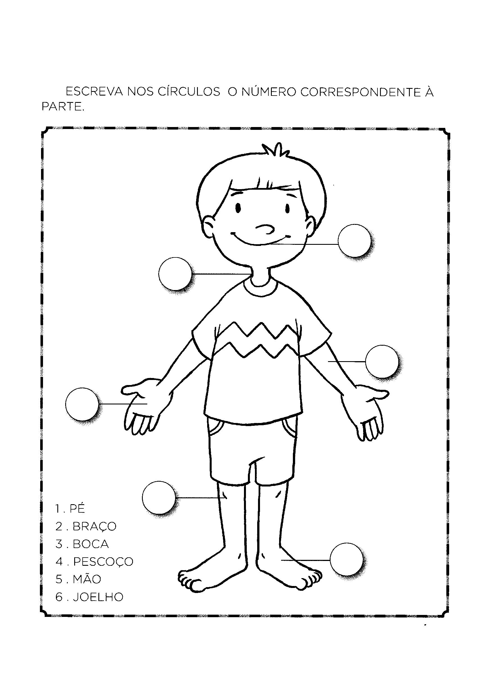 Numerar as partes do corpo