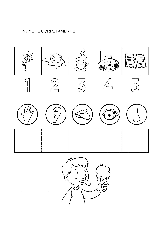 Numerar orgãos e sentidos
