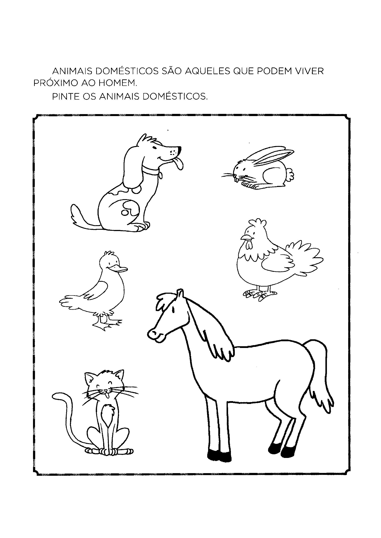 Pintar os animais domésticos