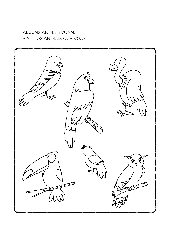 Pintar os animais que voam